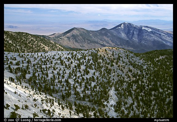 Mountains covered with Bristlecone Pines near Mt Washington, morning. Great Basin National Park (color)