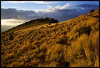 Sage covered slopes at sunset, Snake Range. Great Basin National Park ( color)