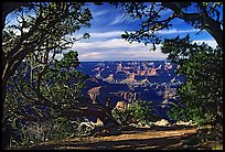 Grand Canyon framed by trees. Grand Canyon National Park, Arizona, USA.