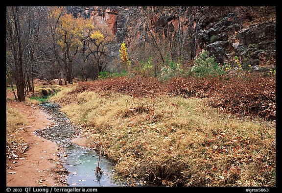 Creek in Havasu Canyon, late fall. Grand Canyon National Park (color)