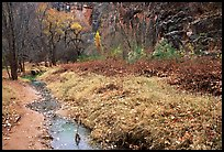 Creek in Havasu Canyon, late fall. Grand Canyon National Park, Arizona, USA. (color)
