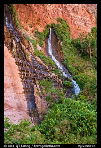 Vaseys Paradise, hanging garden with waterfalls springing out of canyon wall.. Grand Canyon National Park (color)