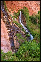 Vaseys Paradise, hanging garden with waterfalls springing out of canyon wall.. Grand Canyon National Park ( color)