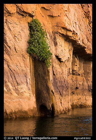 Vegetation clinging on cliff above river. Grand Canyon National Park (color)