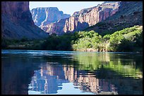 Cliffs and vegetation reflected in Colorado River, morning. Grand Canyon National Park ( color)
