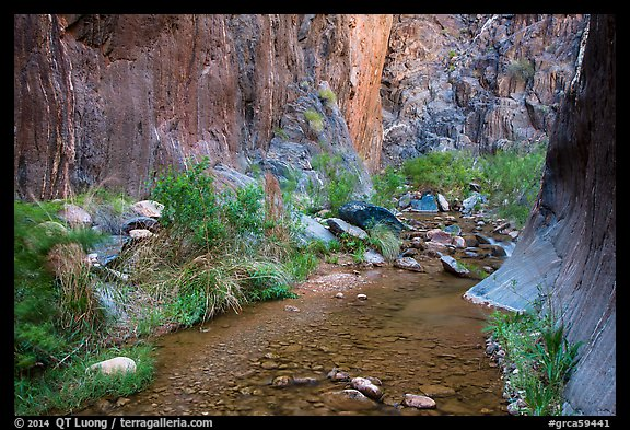 Stream and riparian environment, Clear Creek. Grand Canyon National Park (color)