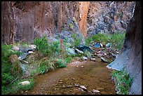 Stream and riparian environment, Clear Creek. Grand Canyon National Park ( color)