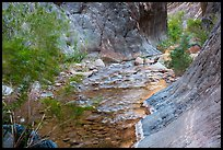 Gorge and riparian environment, Clear Creek. Grand Canyon National Park ( color)
