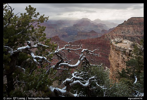Snow on branches and Grand Canyon with clouds. Grand Canyon National Park (color)