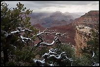 Snow on branches and Grand Canyon with clouds. Grand Canyon National Park ( color)