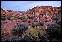 Flowers and mesas in Surprise Valley near Tapeats Creek, dusk. Grand Canyon National Park, Arizona, USA.