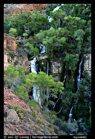 Trees and Thunder River lower waterfall. Grand Canyon National Park (color)