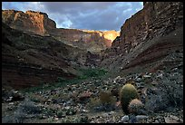 Cactus and canyon walls, Tapeats Creek. Grand Canyon National Park, Arizona, USA. (color)