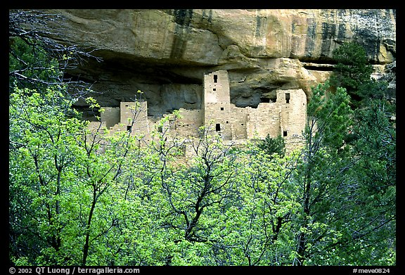 Trees and Cliff Palace, morning. Mesa Verde National Park (color)