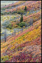 Fall color over shrub slopes. Mesa Verde National Park, Colorado, USA.