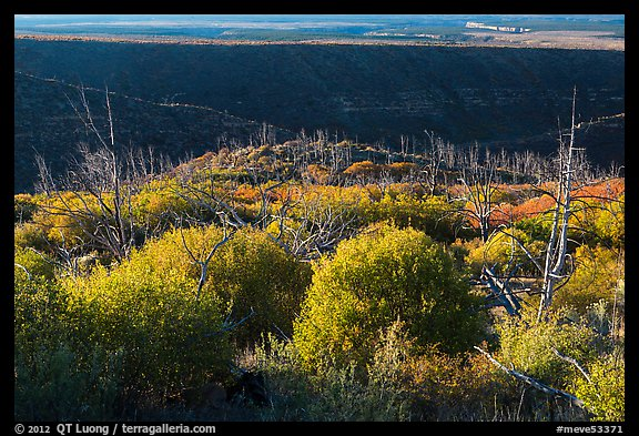 Trees, shrubs, and cliff shadow, early morning. Mesa Verde National Park (color)