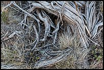 Close up of grasses and roots. Mesa Verde National Park ( color)