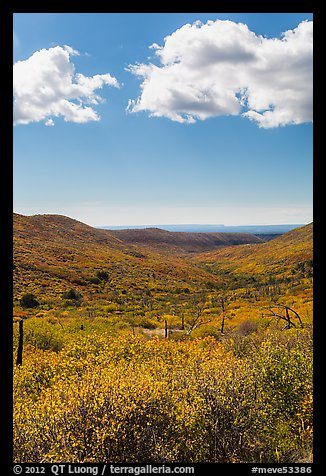 Clouds and landscape with fall colors. Mesa Verde National Park (color)