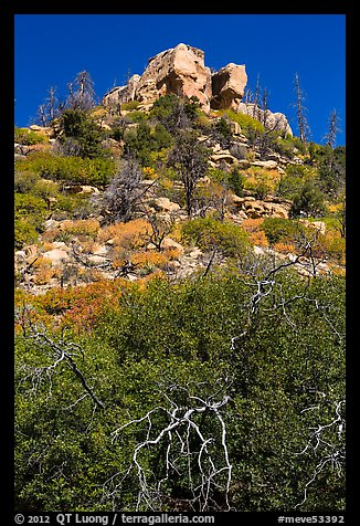 Outcrop with shurbs in fall foliage. Mesa Verde National Park (color)
