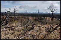 Burned trees and mountains from Wetherill Mesa. Mesa Verde National Park ( color)