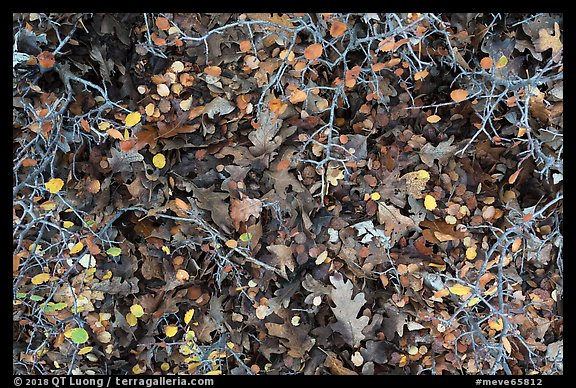 Close-up of bare branches and fallen leaves. Mesa Verde National Park (color)
