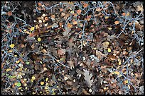 Close-up of bare branches and fallen leaves. Mesa Verde National Park ( color)