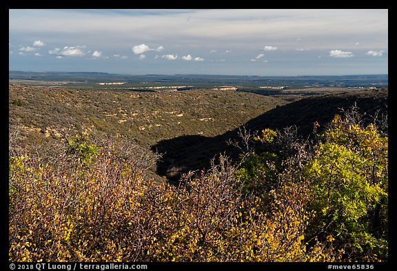 Srubs in autumn and cuesta, Wetherill Mesa. Mesa Verde National Park (color)