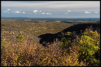 Srubs in autumn and cuesta, Wetherill Mesa. Mesa Verde National Park ( color)