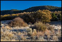 Frozen grasses and oaks. Mesa Verde National Park ( color)