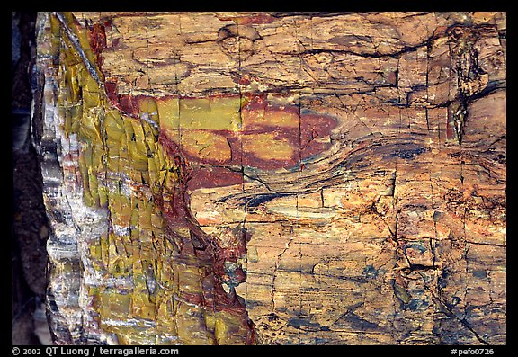 Colorful fossilized log close-up. Petrified Forest National Park (color)