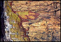 Colorful fossilized log close-up. Petrified Forest National Park, Arizona, USA.