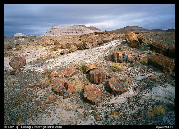 Petrified log and prehistoric-looking badlands. Petrified Forest National Park (color)