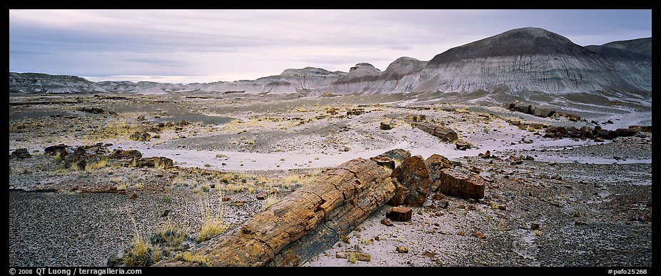 Prehistoric landscape with petrified truncs. Petrified Forest National Park (color)