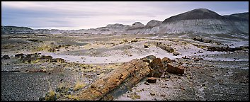 Prehistoric landscape with petrified truncs. Petrified Forest National Park (Panoramic color)