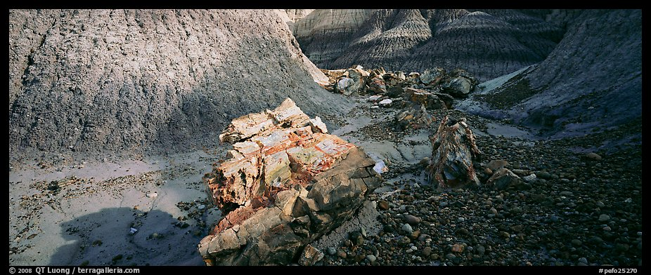Petrified logs scattered in Blue Mesa badlands. Petrified Forest National Park (color)