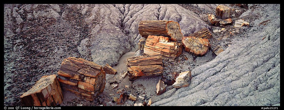 Petrifed logs in badland folds. Petrified Forest National Park (color)