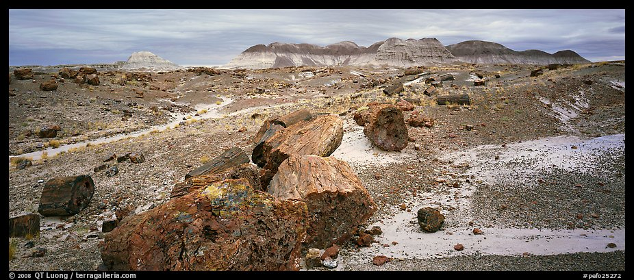 Landscape of colorful petrified logs and badlands. Petrified Forest National Park (color)