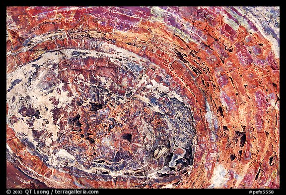 Petrified wood section. Petrified Forest National Park (color)