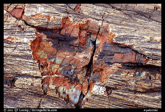 Petrified log detail with bark. Petrified Forest National Park (color)