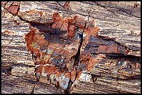 Petrified log detail with bark. Petrified Forest National Park, Arizona, USA.