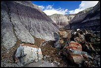 Colorful petrifieds logs in Blue Mesa, afternoon. Petrified Forest National Park, Arizona, USA.