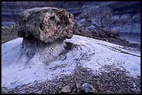 Pedestal petrified log in Blue Mesa, afternoon. Petrified Forest National Park, Arizona, USA.