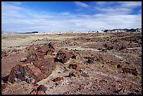 Long Logs area, morning. Petrified Forest National Park ( color)
