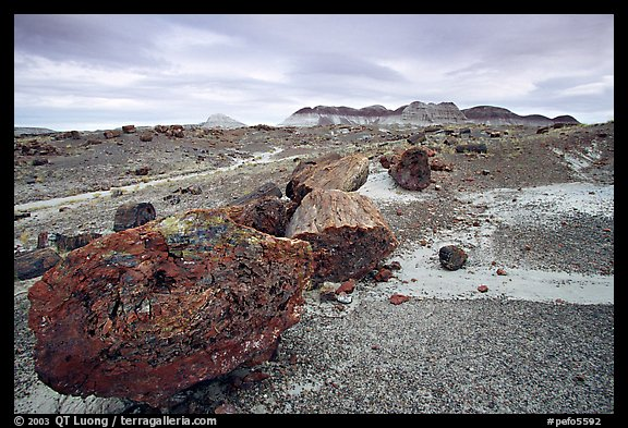 Colorful large fossilized logs and badlands of Chinle Formation, Long Logs area. Petrified Forest National Park (color)