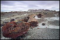 Colorful large fossilized logs and badlands of Chinle Formation, Long Logs area. Petrified Forest National Park, Arizona, USA. (color)