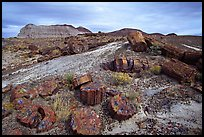 Colorful slices of petrified wood and badlands in Long Logs area. Petrified Forest National Park, Arizona, USA.