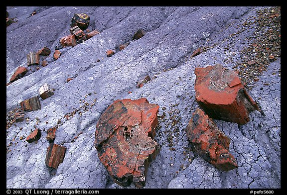 Red slices of petrified wood and blue clay, Long Logs area. Petrified Forest National Park, Arizona, USA.
