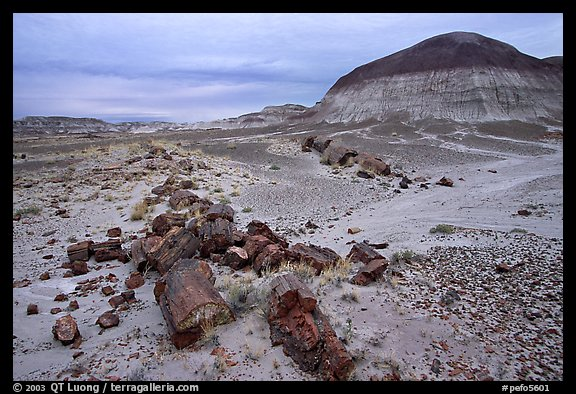 Fossilized wood on soft layer of earth made of mud, sand, and ash. Petrified Forest National Park (color)