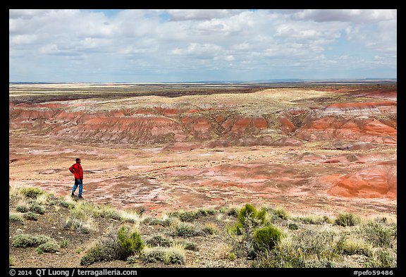 Visitor looking, Painted Desert near Tiponi Point. Petrified Forest National Park (color)