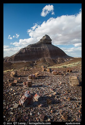 Petrified wood and eroded monolith. Petrified Forest National Park (color)